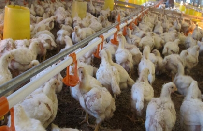 DTK Poultry Co., Ltd